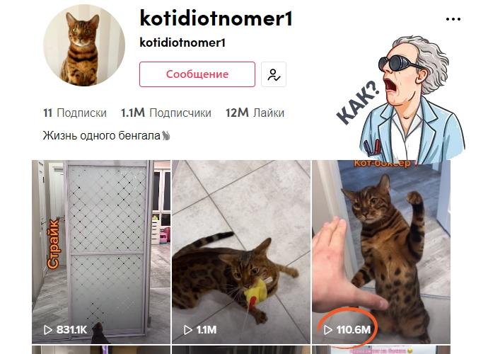 Кот боксёр и Тик Ток аккаунт с миллионом подписок